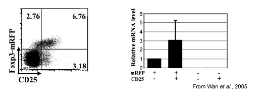 Figure1. mRFP expression correlates with Foxp3-expressing T cells in vivo